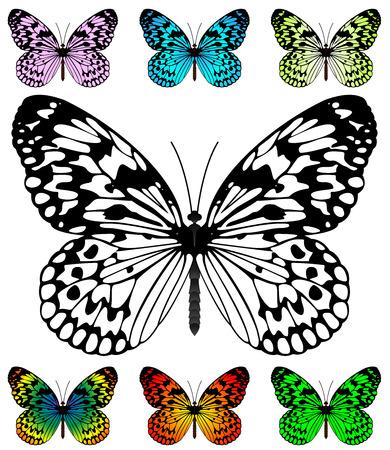 Plantilla de vector de mariposa con muestras. Color de fácil alas editable. Mariposa de cometa de papel y papel de arroz, especie de Leuconoe de la idea.  Ilustración de vector