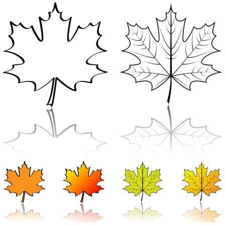 red maples: Black and white vector shapes of maple leaf with four color samples isolated on white background.