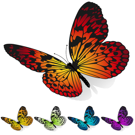 Vector set of colorful butterflies sitting on the surface  isolated on white background. Illustration