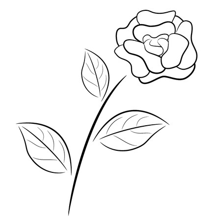 rose stem: Abstract black and white rose in outline drawing style.