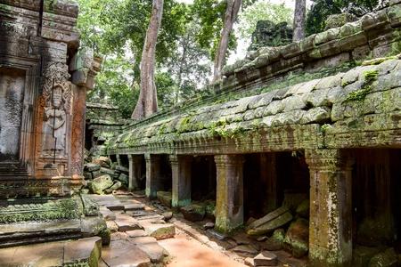 siem reap: Ancient ruins in Ta Prohm or Rajavihara Temple  at Angkor, Siem Reap, Cambodia