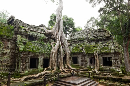 Ancient Ta Prohm or Rajavihara Temple at Angkor, Siem Reap, Cambodia  photo
