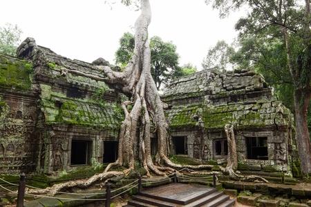 Ancient Ta Prohm or Rajavihara Temple at Angkor, Siem Reap, Cambodia  photo