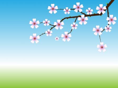 flor de durazno: Primavera de fondo con floración rama de un árbol con copia espacio. Vectores