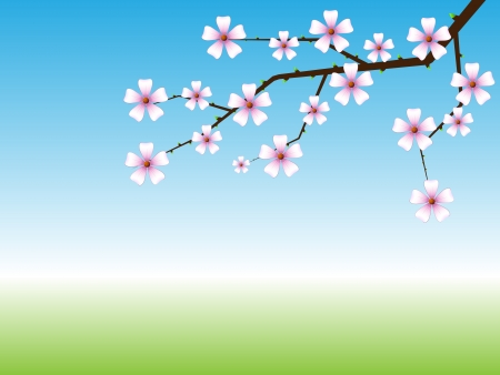 peach blossom: Spring background with blossoming tree branch with copy space.