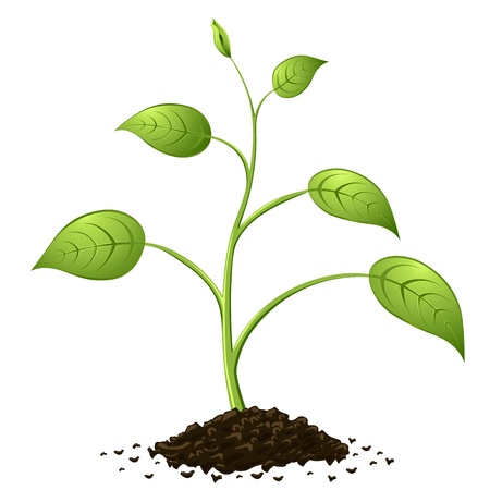 seedling growing: Green spring growing from heap of soil isolated on white background