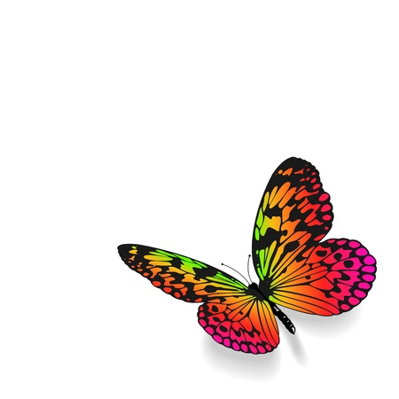 lepidoptera: Colorful butterfly on white background