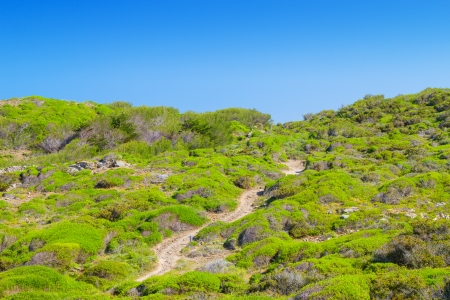 cami: Cami de Cavalls walking path going through green hills of Menorca island, Spain  It encircles the whole island and has 186 km or 116 miles