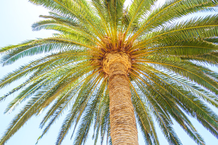 cycadaceae: Under the palm travel background. Stock Photo