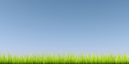 blue green background: Green grass background with clear blue sky.