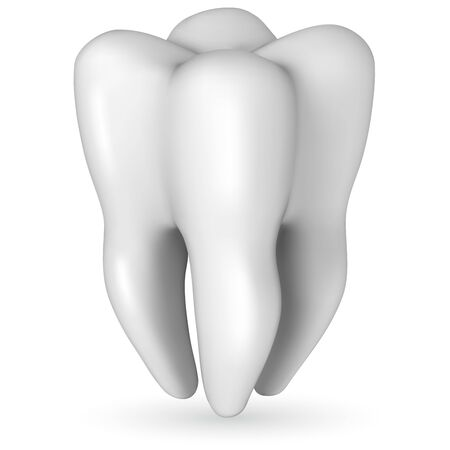 molar: Healthy white molar tooth realistic vector illustration isolated on white background. Scale-free resizable tooth template. Illustration