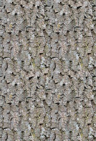 old texture: Seamless old oak tree bark texture.