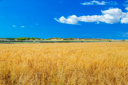 menorca: Menorca farmland landscape on sunny day, Balearic islands, Spain.