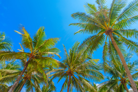 blue summer sky: Tall palm trees with blue sky summer background. Stock Photo