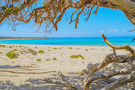 Chrissi (Chrysi) island background with juniper tree branches in the foreground, Crete, Greece. One of the most beautiful uninhabited island of Greece. Stock Photo
