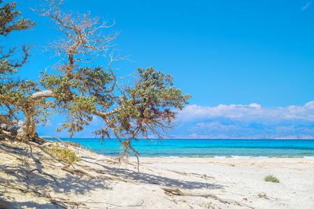 Chrissi-de achtergrond van het eilandstrand met jeneverbessenboom in de voorgrond, Kreta, Griekenland. Een van de mooiste onbewoonde eiland van Griekenland.