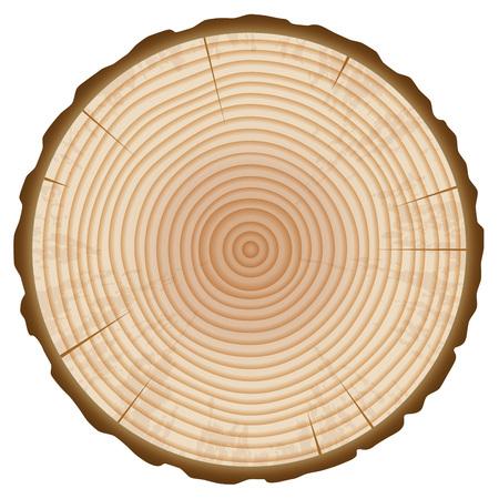 Baum-Stamm-Jahresring-Abschnitt lokalisiert auf weißem Hintergrund. Holzscheibe Design-Element. Vektor-Illustration. Vektorgrafik