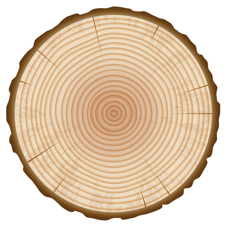 Tree Trunk Annual Rings Section Isolated on White Background. Wood Slice Design Element. Vector Illustration.