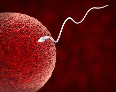Spermatozoon Fertilizing Ovum. Fertilization Process Macro Image. Medical Scientific 3D Illustration.