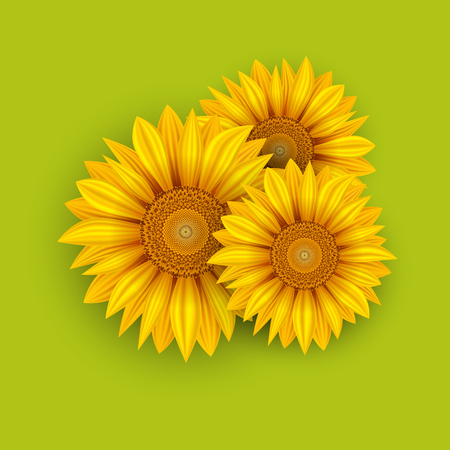 Yellow Sunflowers Summer Background. Vector Illustration. Vectores