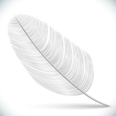 White Feather Isolated on White Background. Vector Illustration. Illustration