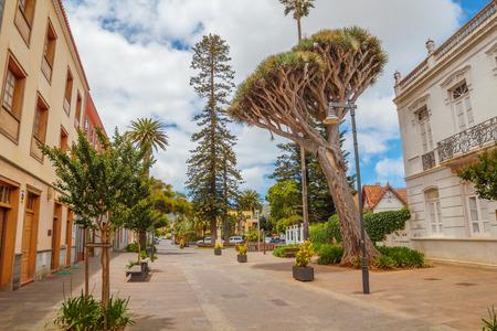 Ulica z Big Dragon Tree na Starym Mieście La Laguna, Teneryfa, Hiszpania.