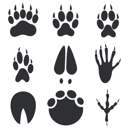Animal Paws, Hoofs and Foot Trace Prints Isolated on White Background. Wild Animals Step Imprints Set. Vector Illustration.