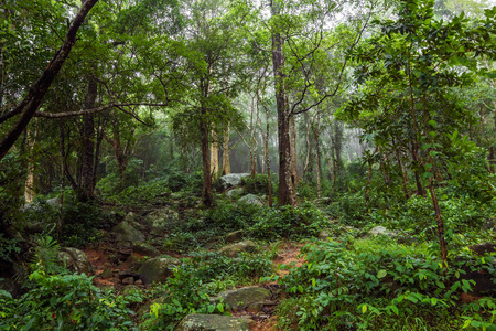 Green Jungle Forest Nature Background. Foggy Rain Forest. Imagens