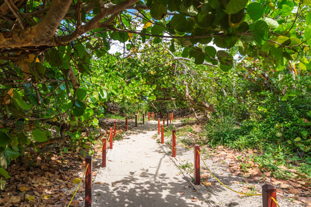 White sand pathway to the beach through the green tropical forest.