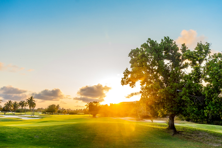 Tree on the Green Hills with Sunset Summer Background. Bright Sunset Backdrop. Imagens
