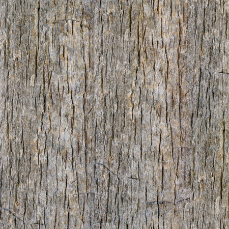 Seamless Palm Tree Bark Background. Tileable Trunk Texture of the Old Palm Tree.