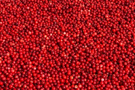 Fresh Red Bilberry Background. Frame Filled with Red Berries Cooking Backdrop. Stockfoto