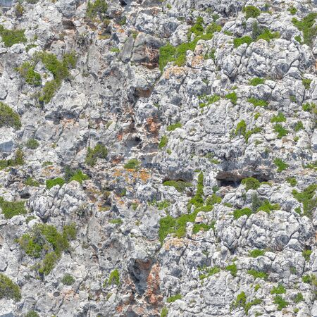 Seamless Sea Cliff Texture. Stone Surface with Green Plants Background. Stockfoto