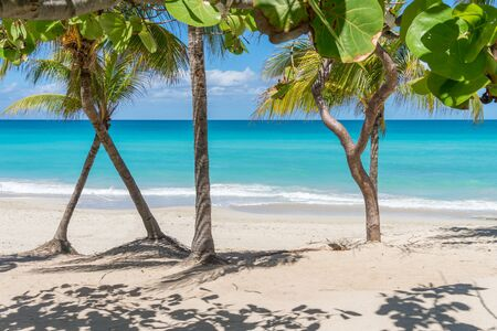 Cuba Varadero Beach View on Atlantic Ocean. Sunny Tropical Seascape with Palm Trees. Summer Nature Background.