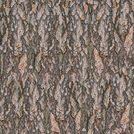 Pine Tree Bark Seamless Texture. Seamless Wooden Background.