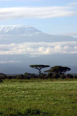 kilimanjaro: Kilimanjaro landscape, Kenya