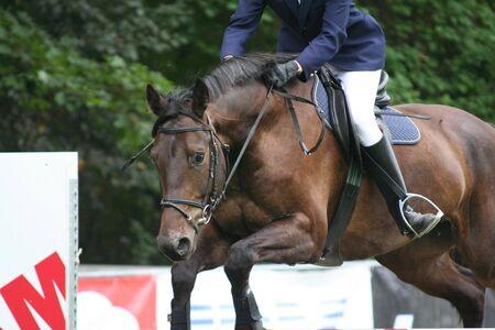 Jumping horse Stock Photo