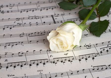 Witte roos op muziek blad, close-up shot Stockfoto