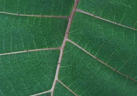 Close up van groene bladeren tonen gedetailleerde veining