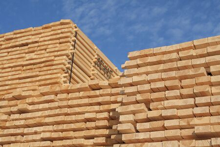 Piles of pine planks stacked for drying Stock Photo