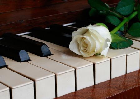 One white rose on white piano keys