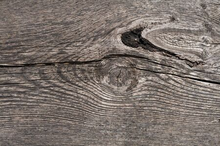 Close up shot of an old wood texture. photo