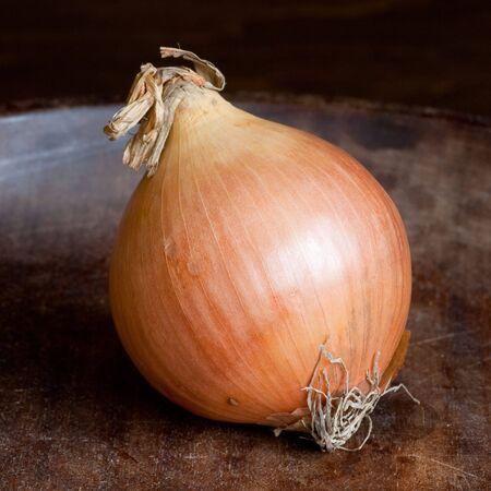 one big fresh onion on wooden background