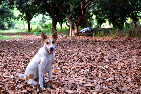 Thai pupy in the garden sitting on dry leaves. Stock Photo