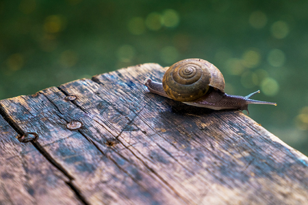old desk: Little snail on wooden table with bokeh ground