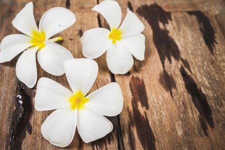 White Frangipani (Plumeria) flowers on wooden floor background.