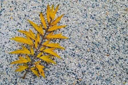 Yellow leaf on white terrazzo floor.