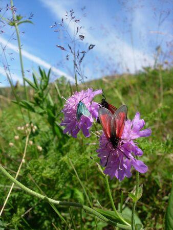 alpen: Alpen flower with inects