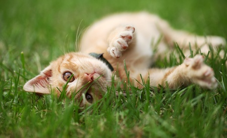 Little cat playing in grass. Selective focus, shallow DOF photo