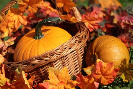 Pumpkins in basket and colorful autumn leaves photo